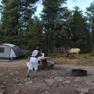 Zelten mit Kindern im Südwesten der USA | Amerika Forum